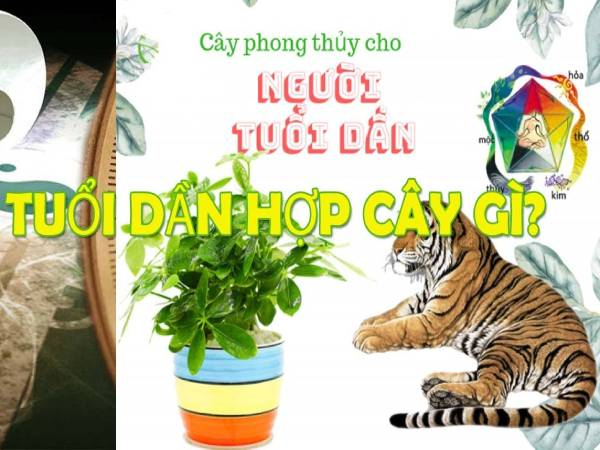 cay-phong-thuy-tuoi-dan-de-thang-tien-phat-tai-doi-dao-suc-khoe
