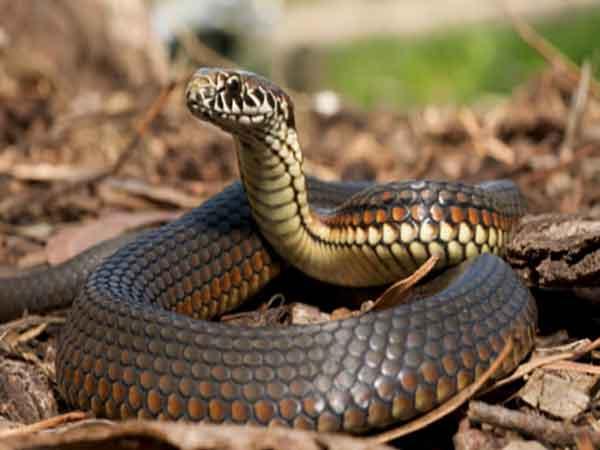 Nằm mơ thấy rắn đuổi đánh số mấy ?