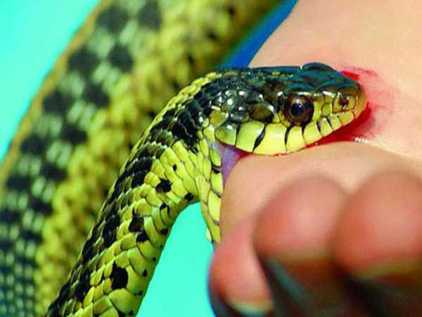 Giải mã nằm mơ bị rắn cắn là điềm gì?