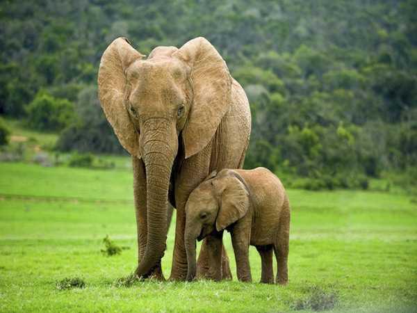 Mơ thấy voi đánh con gì trúng lớn và đem lại nhiều may mắn?