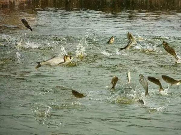 Nằm mơ thấy ao cá là điềm báo gì?