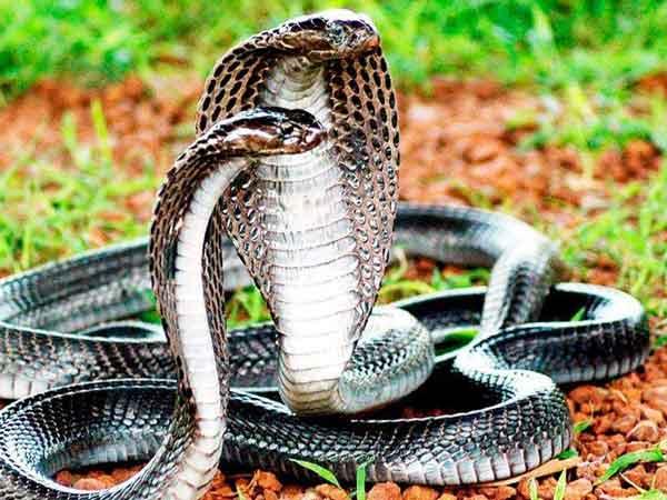 Giải mã ý nghĩa giấc mơ thấy rắn đuổi là điềm gì ?