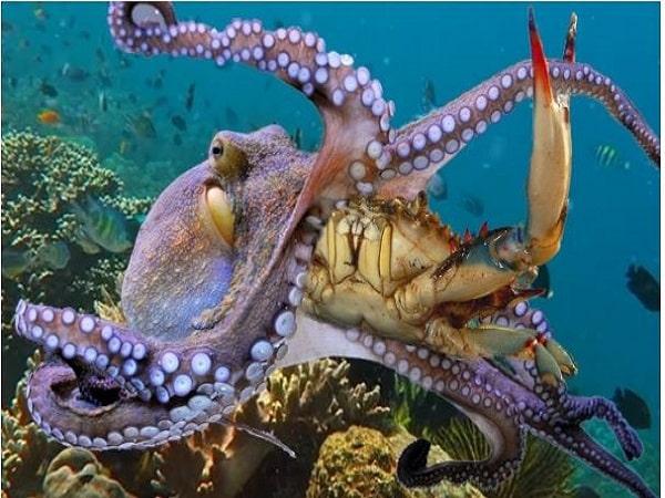 Ngủ mơ thấy bạch tuộc đánh con gì thắng đậm?