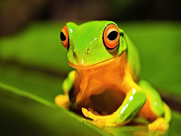 Nằm mơ thấy ếch chơi xổ số con gì may mắn